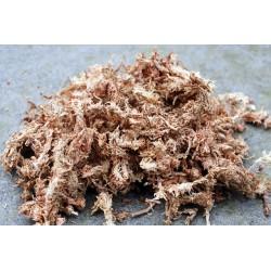 Sphagnum mos